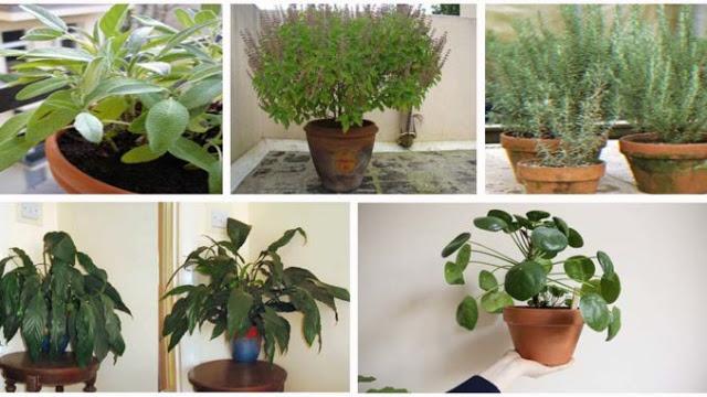 Photo of 12 Plantas que atraem energias positivas para sua casa!