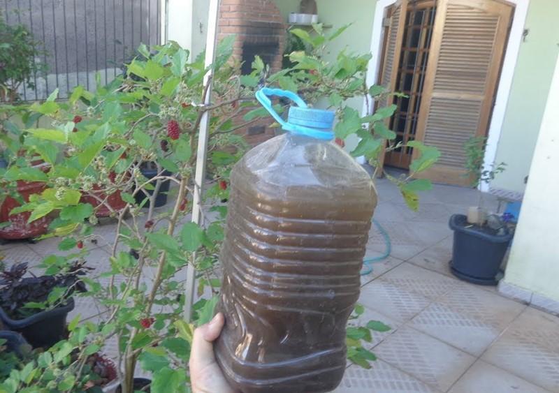 Photo of Com este adubo natural suas plantas vão florir em 15 dias