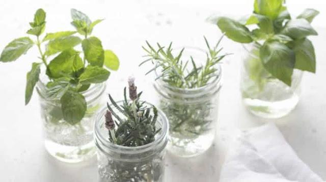 Photo of Conheça as 8 plantas aromáticas que não necessitam de solo para crescer.