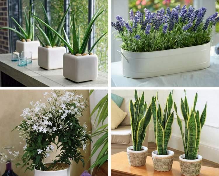 Photo of Tenha uma dessas 4 plantas em seu quarto se você quer melhorar a qualidade do seu sono