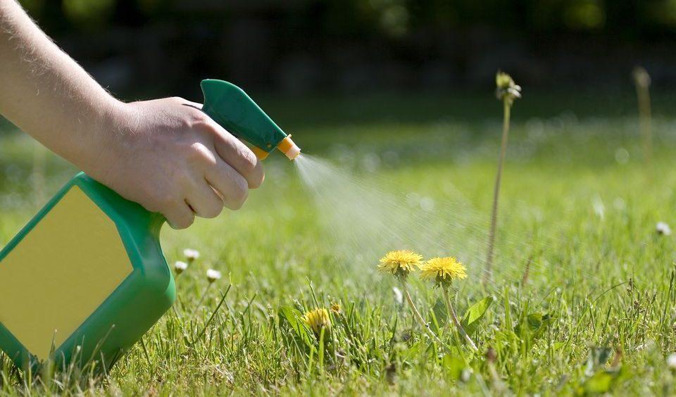 Photo of Solução caseira 100% natural para matar ervas daninhas de forma fácil