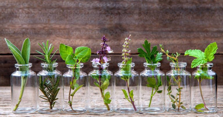 Photo of 10 ervas que você pode cultivar dentro de um copo com água