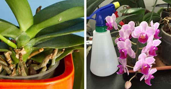Photo of 3 dicas simples e eficazes para reviver suas Orquídeas