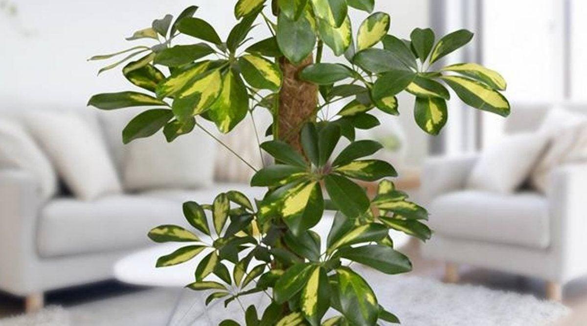 Photo of 12 plantas não recomendadas que você provavelmente você tem em casa