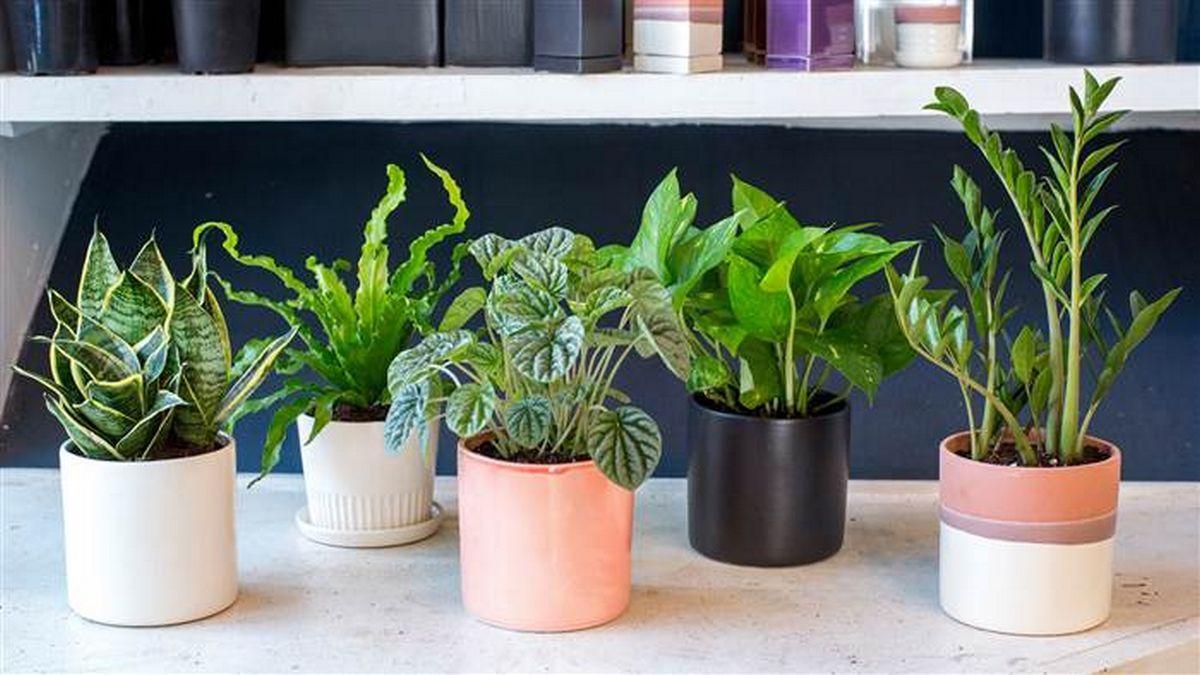 Photo of 5 plantas que você deve ter no quarto para dormir melhor