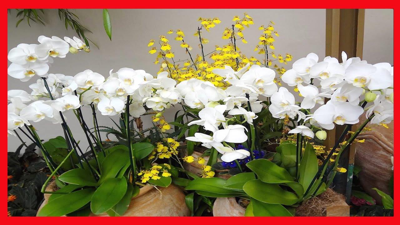 Photo of 3 regras básicas para ter orquídeas lindas, fortes e saudáveis