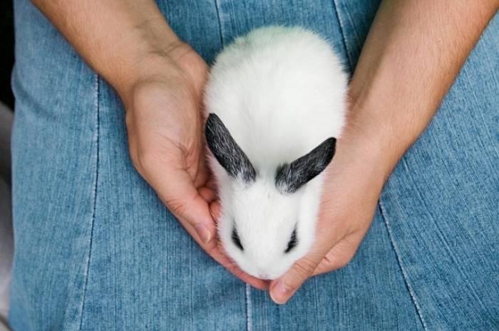 Photo of Estudo mostra que pessoas que falam com animais são mais inteligentes