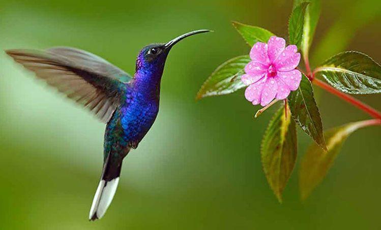 Photo of Quando você vê um beija-flor, uma alma amada veio te visitar