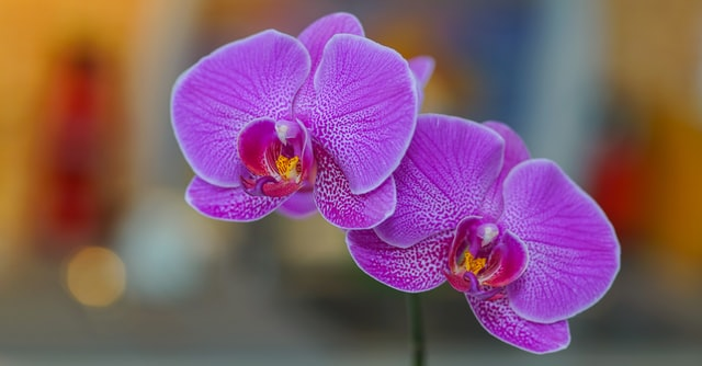 Photo of Fertilizantes caseiros para orquídeas: fortalece e estimula o crescimento